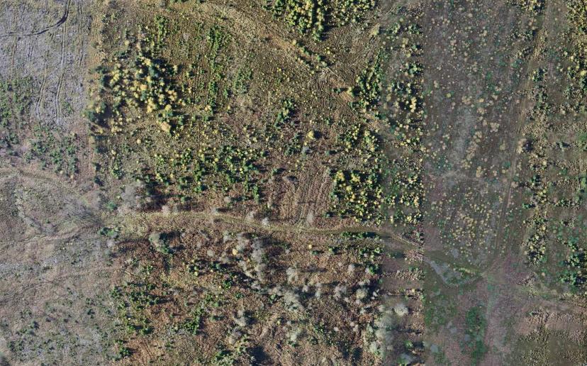 Silton Forest